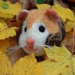 Pelíšek v listí - morčátko